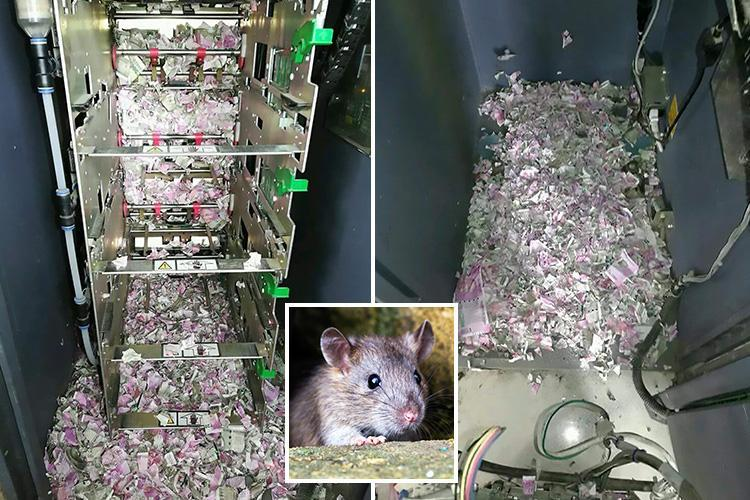 Rat Eats Up Almost $19,000 in Cash and Dies in ATM